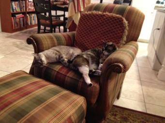 2 cats asleep